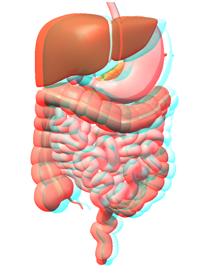 3D image - anaglyph - 3D human body - digestive system